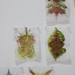 Faith Wilding - 71 Leaves, 2014, Watercolor and Ink on Vellum