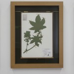 "Jenny Yurshanksy - Ricinus communis, 2015, painted steel, plexiglass, MDF, hardboard, brass, assorted paper, hand-cut silhouettes, 25"" x 20"" x 1.5"""