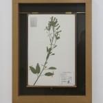 "Jenny Yurshanksy - Nicotiana glauca, 2015, painted steel, plexiglass, MDF, hardboard, brass, assorted paper, hand-cut silhouettes, 25"" x 20"" x 1.5"""